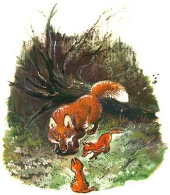 http://www.foxdesign.ru/fox/img/fox01b.jpg